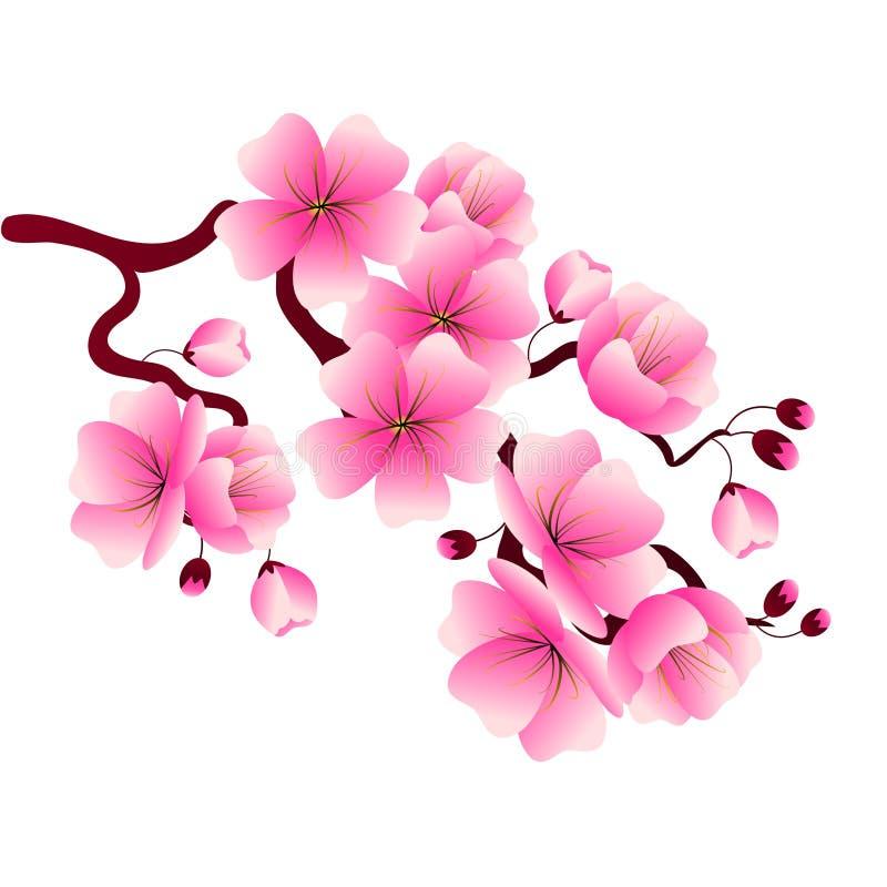 Ramo da flor de cerejeira com as flores cor-de-rosa para decorar bandeiras, ilustração royalty free