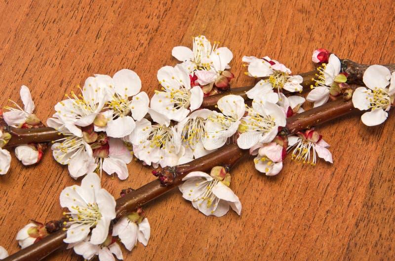 Download Ramo da flor do abricó imagem de stock. Imagem de pétala - 29833643