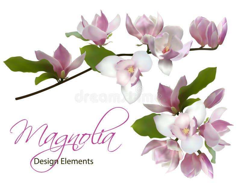 Ramo da magnólia e flor isolada ramalhete da mola ilustração stock