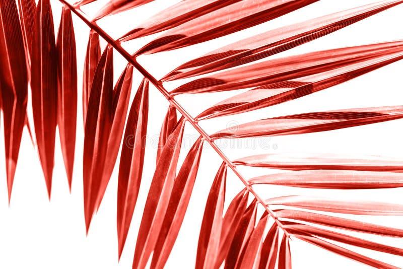 Ramo da palma em coral vivo da cor fotografia de stock