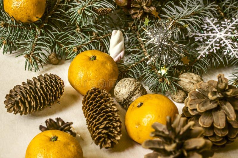 ramo da Pele-árvore com tangerinas e porcas dos cones foto de stock