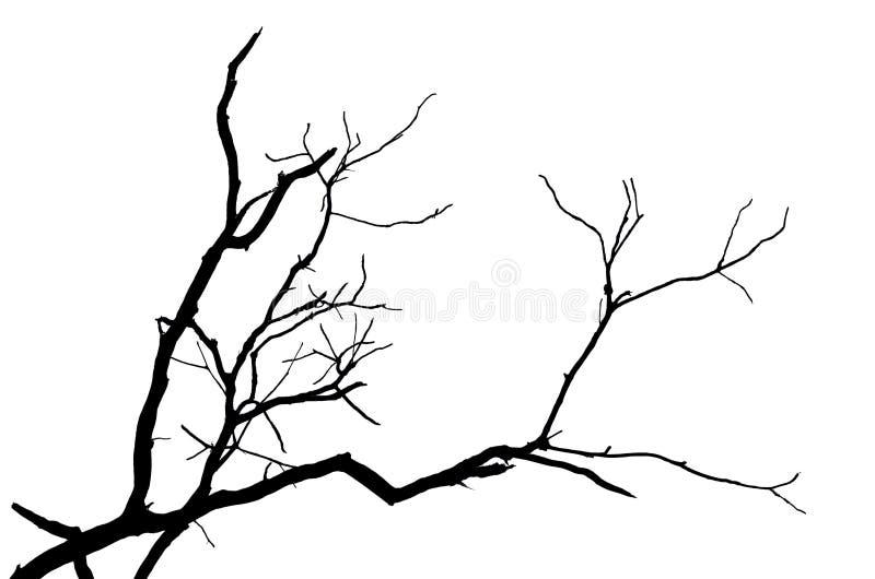 Ramo da silhueta da árvore isolado ilustração do vetor