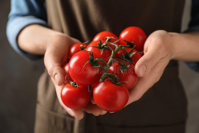 Ramo da terra arrendada da mulher de tomates de cereja maduros imagem de stock