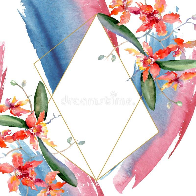 Ramo das orquídeas corais Flor botânica floral Grupo da ilustração do fundo da aquarela Quadrado do ornamento da beira do quadro ilustração stock