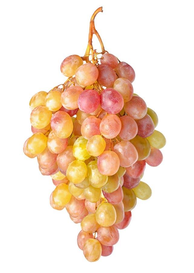 Ramo das uvas de suspensão da sultana isoladas no fundo branco, c fotos de stock