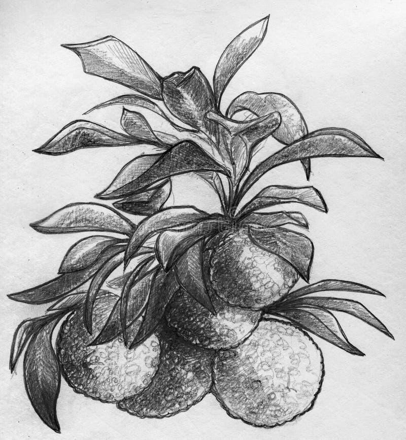 Ramo de árvore alaranjada com frutos ilustração stock