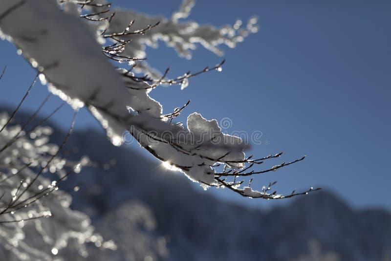 Ramo de árvore coberto com a neve e os icisles brilhantes foto de stock