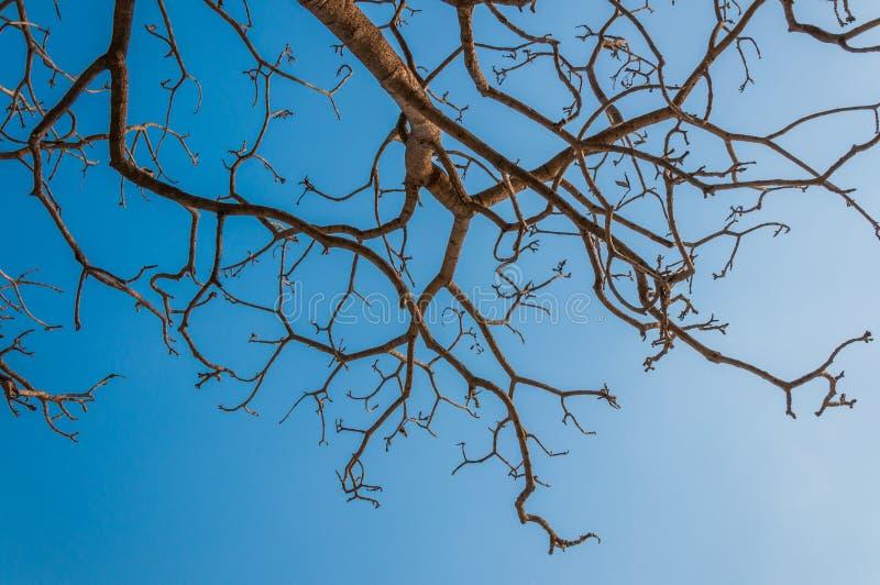 Ramo de árvore com céu azul fotos de stock royalty free