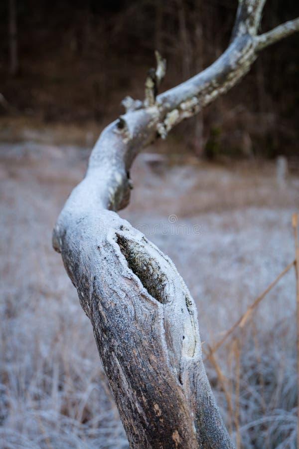 Ramo de árvore com furo fotos de stock royalty free