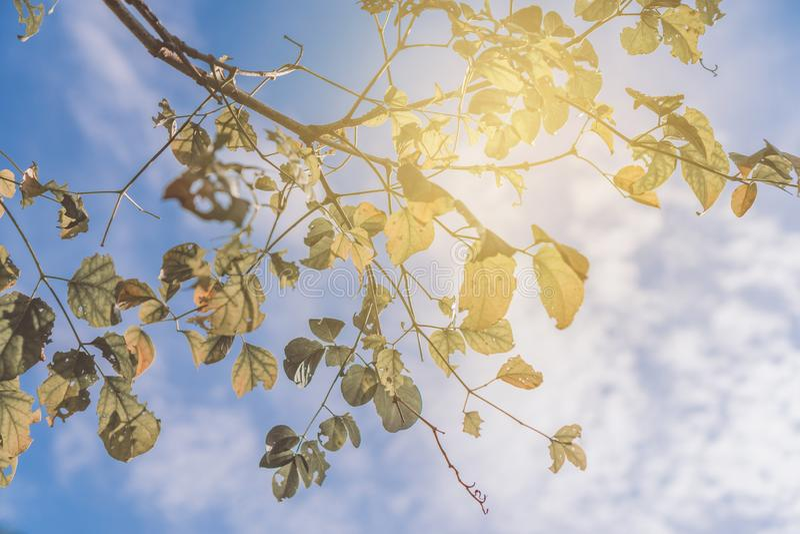 Ramo de árvore da licença do verde amarelo com céu azul imagem de stock royalty free