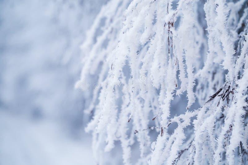 Ramo de árvore decíduo coberto com a neve e a geada imagem de stock