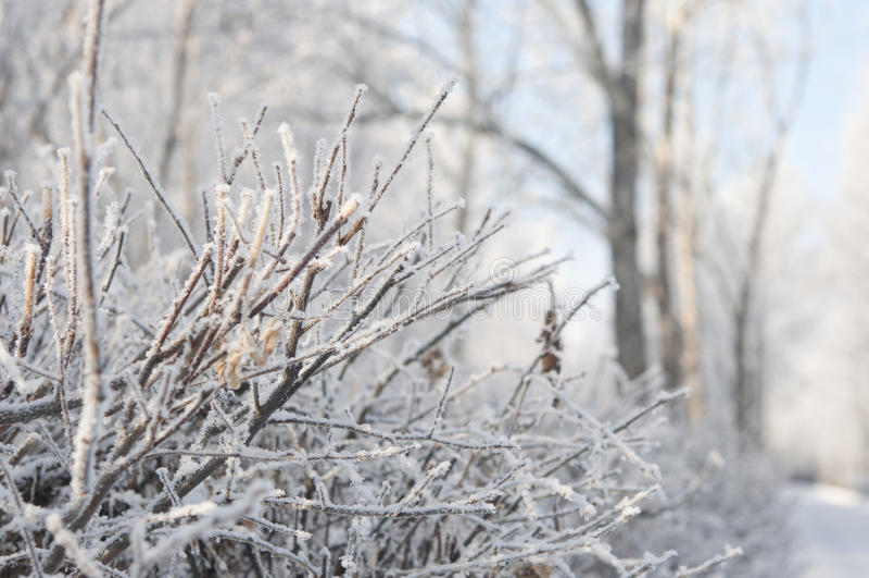Ramo de árvore do inverno fotos de stock