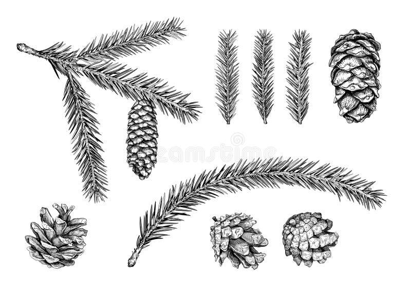 Ramo de árvore do Natal esboço ilustração royalty free