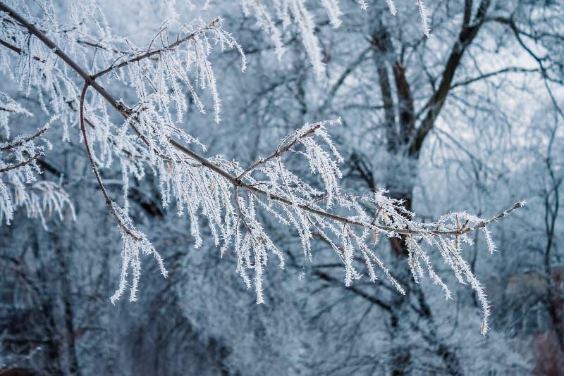 Ramo de árvore gelado na floresta imagens de stock