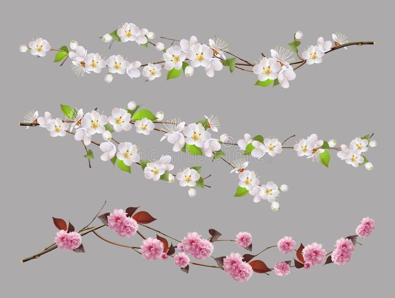 Ramo de árvore, grupo do vetor das flores da mola ilustração royalty free