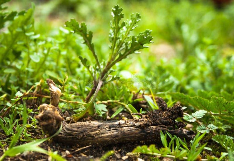 Ramo de árvore na terra cercada pela vegetação, folhas fotos de stock royalty free