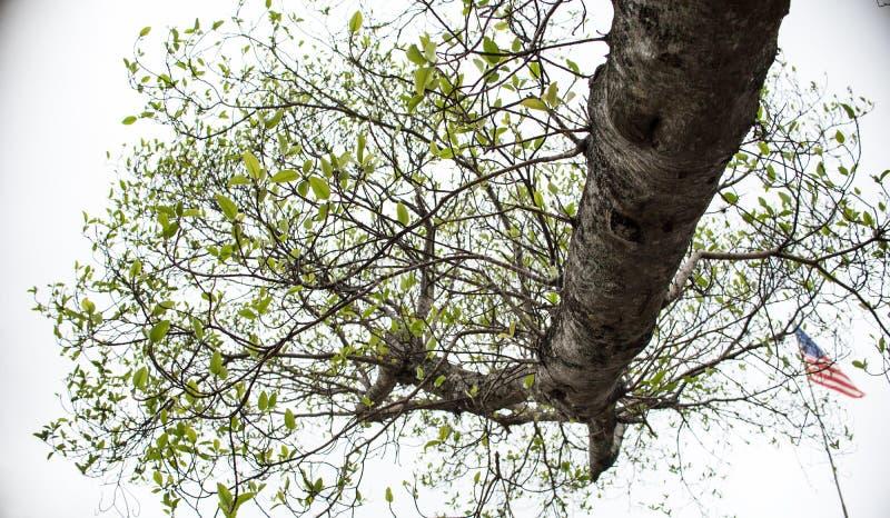 Ramo de árvore no céu imagem de stock