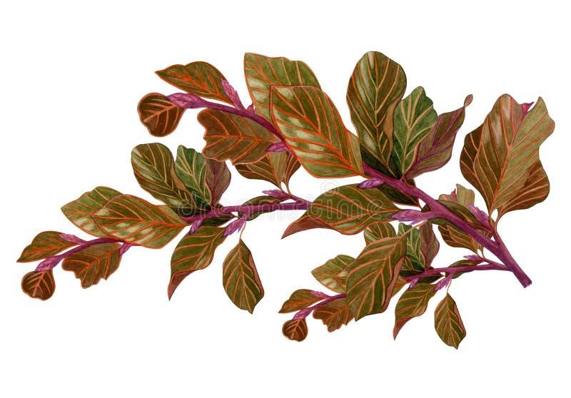 Ramo de árvore secado aquarela com folhas marrons ilustração stock