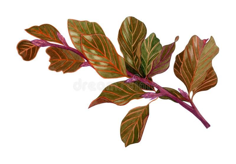 Ramo de árvore secado aquarela com folhas marrons ilustração do vetor
