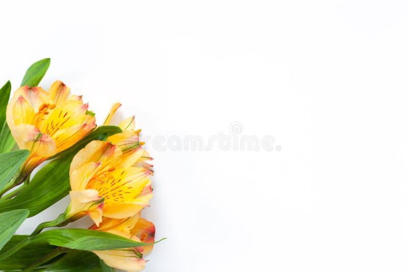 Ramo de alstroemeria amarillo de las flores en el fondo blanco Endecha plana horizontal Maqueta con el espacio de la copia para l imagenes de archivo
