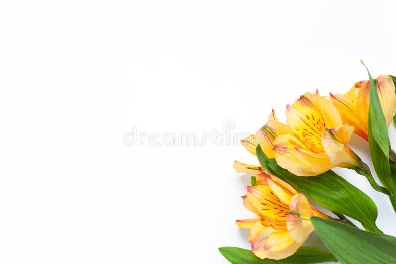 Ramo de alstroemeria amarillo de las flores en el fondo blanco Endecha plana horizontal Maqueta con el espacio de la copia para l fotografía de archivo