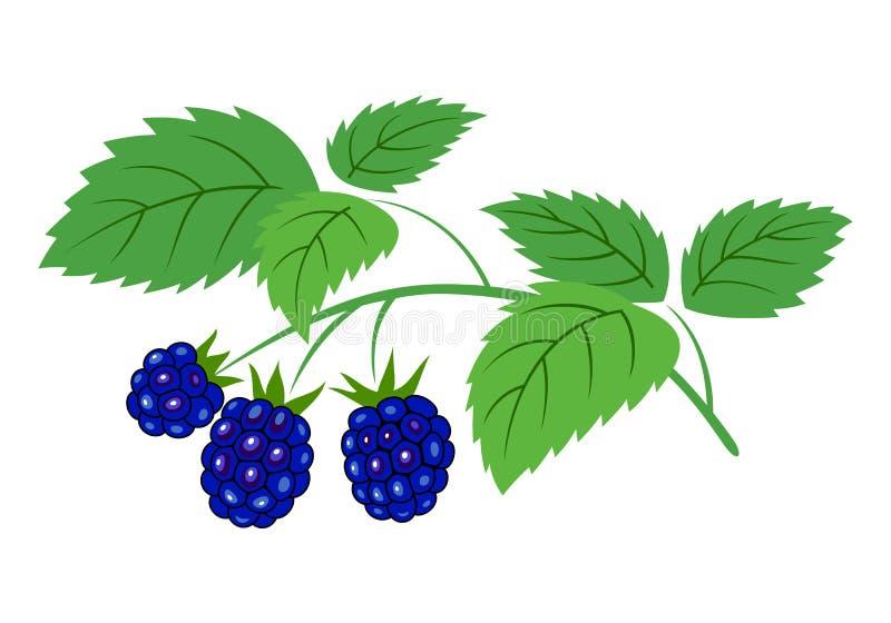 Ramo de Blackberry com ilustração do vetor das bagas ilustração royalty free