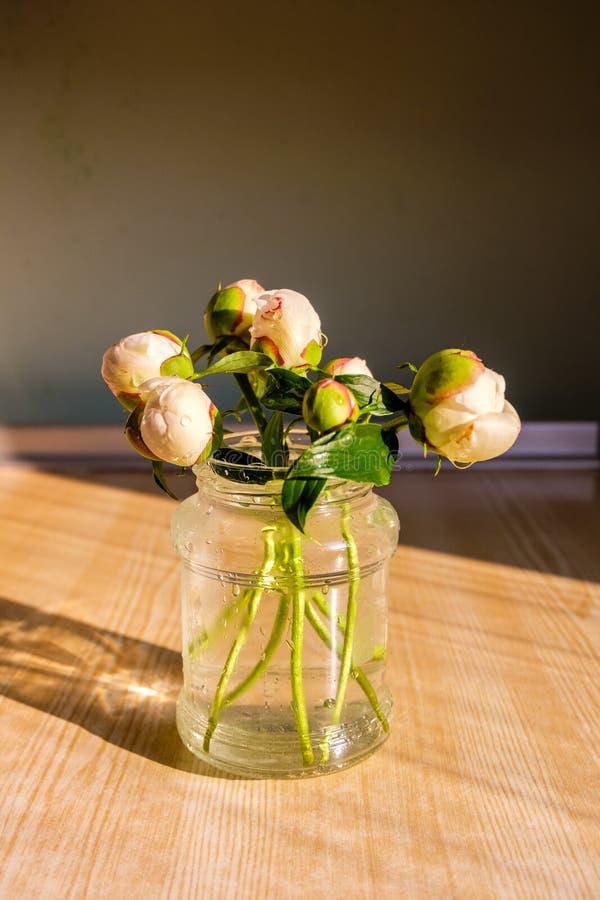 Ramo de blanco fresco - brotes poner crema de las peonías con las gotitas de agua en los pétalos en tarro de cristal simple en la imágenes de archivo libres de regalías