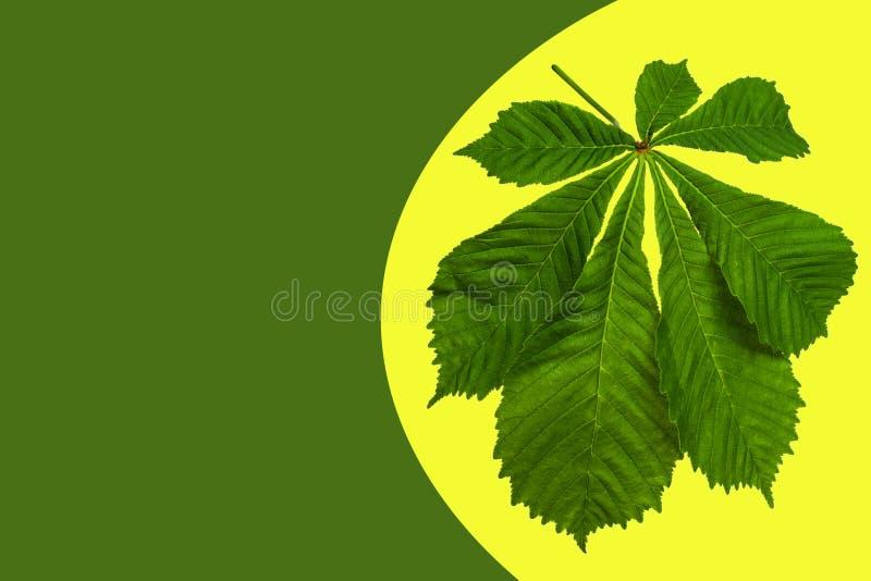 Ramo de castanha com folhas verdes sobre fundo colorido fotografia de stock royalty free