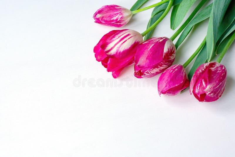 Ramo de cinco flores de tulipanes en un fondo blanco fotografía de archivo libre de regalías