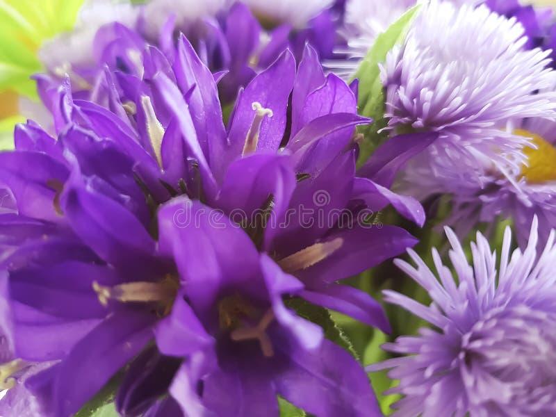 Ramo de crisantemo, primer de la campana, otoño fotografía de archivo libre de regalías