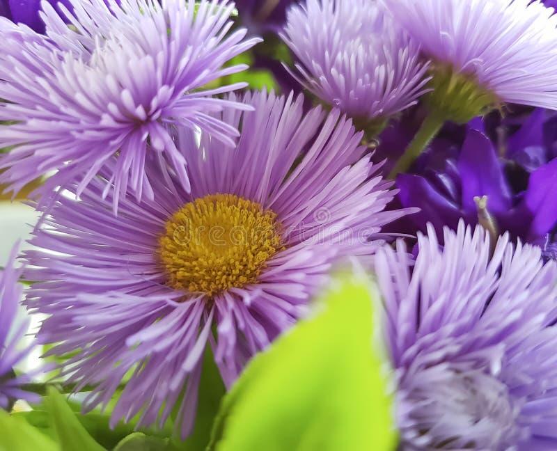 Ramo de crisantemo, primer de la campana, otoño decorativo fotografía de archivo