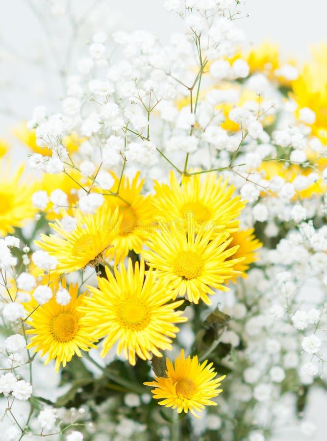 Ramo de crisantemos amarillos fotografía de archivo libre de regalías