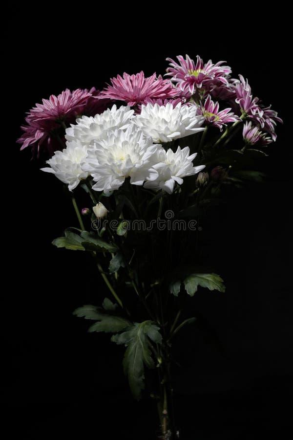 Ramo de crisantemos con la iluminación del contraste en un fondo negro imágenes de archivo libres de regalías