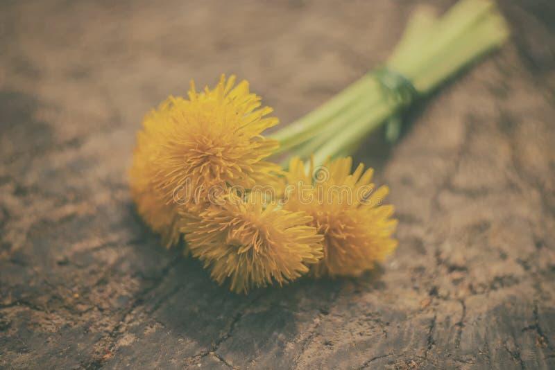 Ramo de dientes de león amarillos imagen de archivo libre de regalías