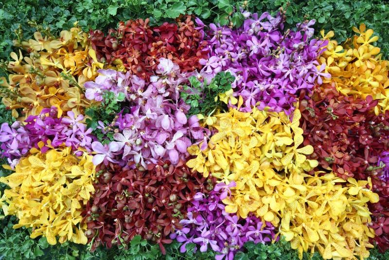 Ramo de flor de la orquídea colorido fotografía de archivo libre de regalías