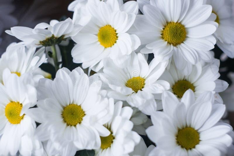 Ramo de flores blancas cerca para arriba foto de archivo