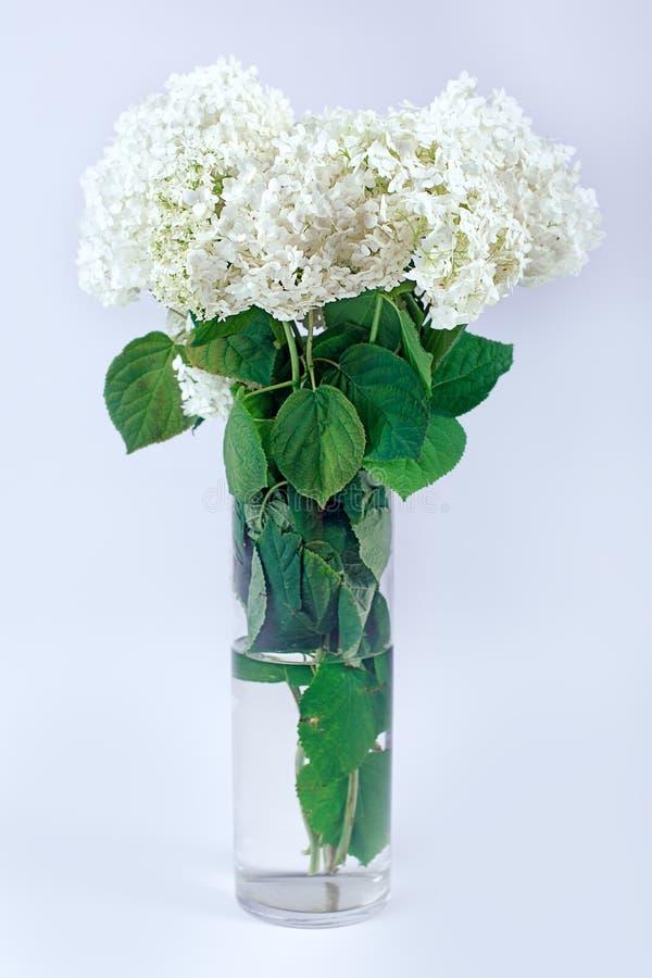 Ramo de flores blancas en el florero de cristal imagen de archivo