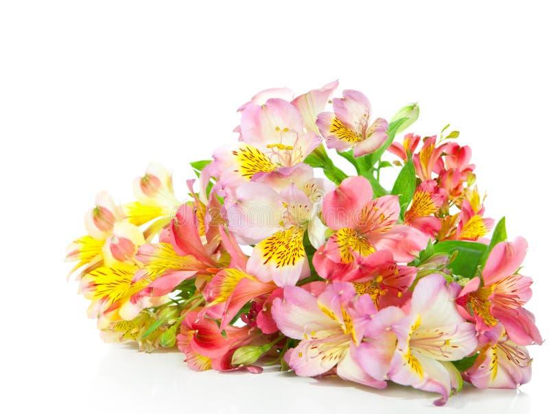 Ramo de flores del Alstroemeria fotografía de archivo libre de regalías