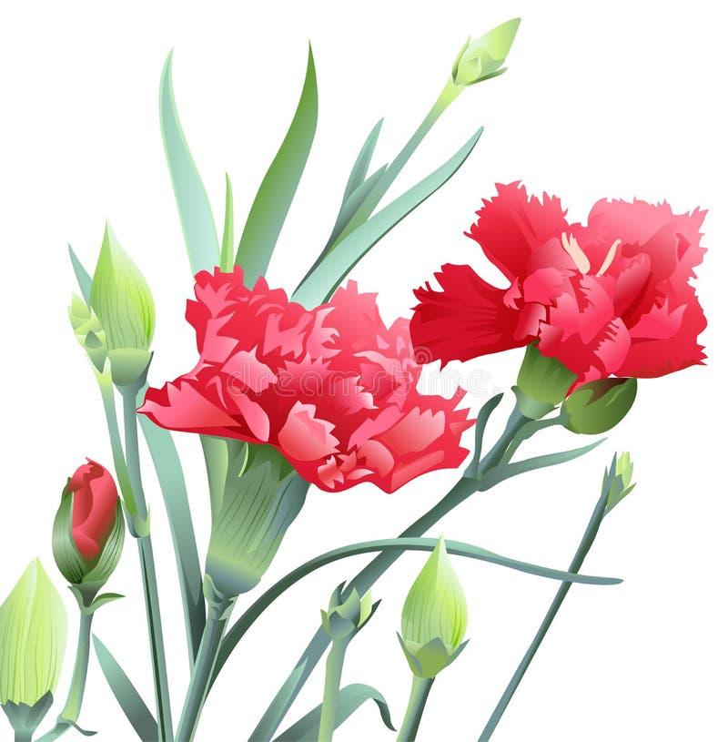 Ramo de flores del clavel en el fondo blanco libre illustration