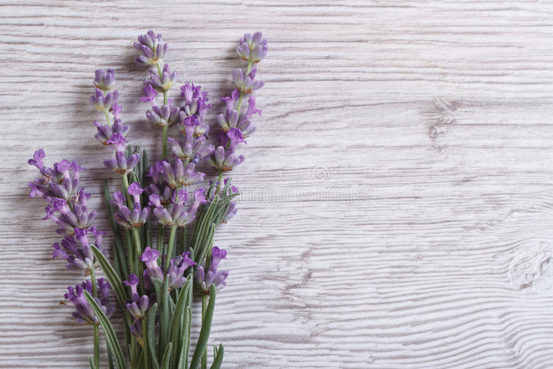 Ramo de flores fragantes de la lavanda Marco floral fotos de archivo