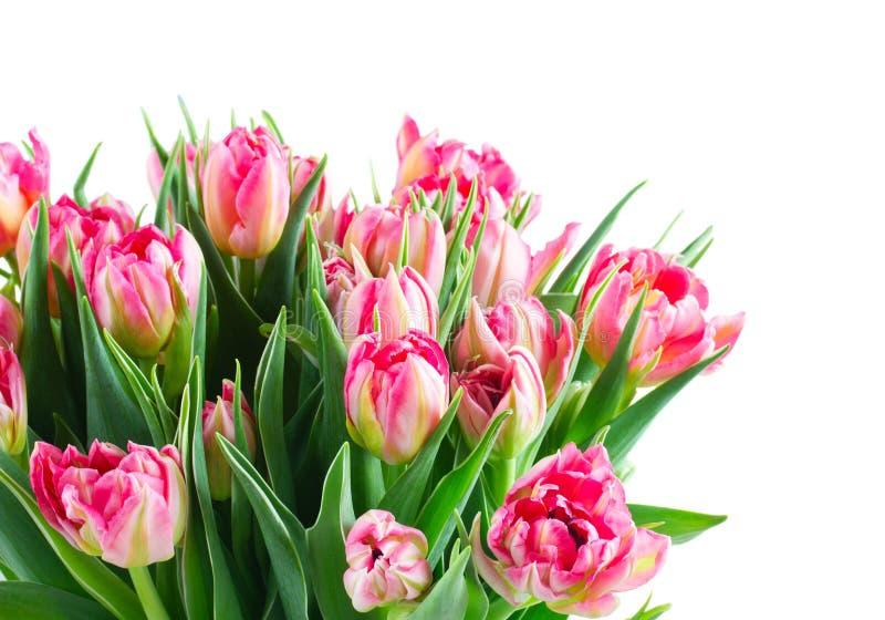 Ramo de flores de los tulipanes imagen de archivo libre de regalías