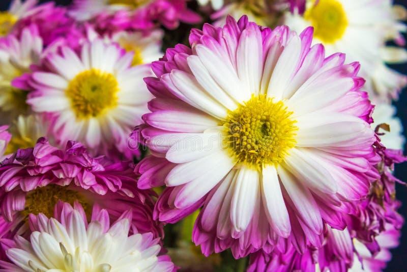 Ramo de flores púrpuras, fondo de la naturaleza imagen de archivo