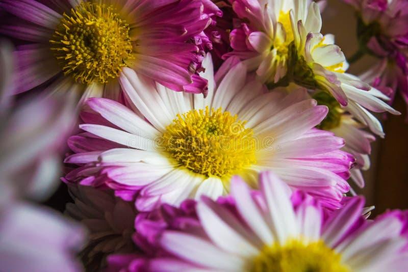 Ramo de flores púrpuras, fondo de la naturaleza fotos de archivo