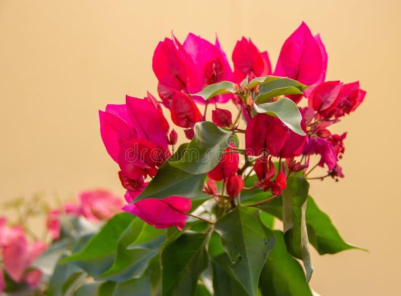 Ramo de flores rojos foto de archivo