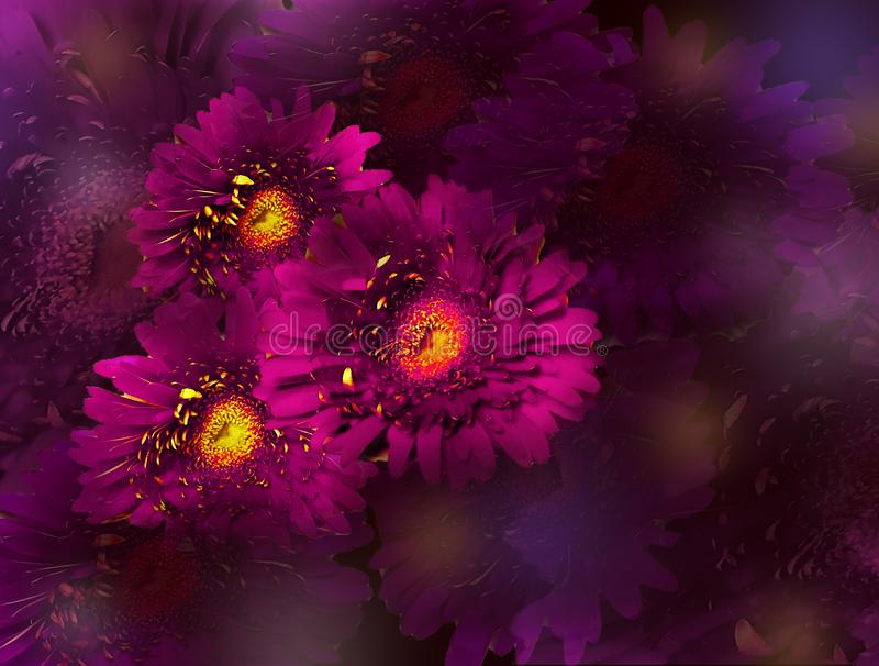 Ramo de flores rosadas del gerbera en el fondo violeta fotos de archivo