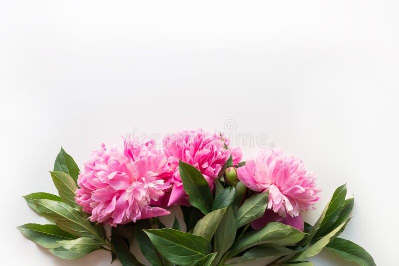 Ramo de flores rosadas de la peonía como marco en blanco Copie el espacio para el texto Visi?n superior Endecha plana imagen de archivo