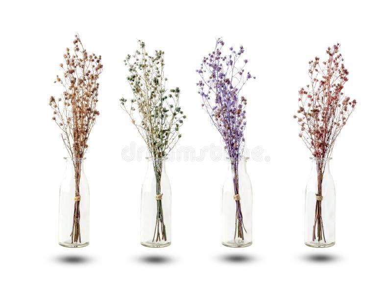 Ramo de flores secadas del Gypsophila para la decoración fotografía de archivo libre de regalías