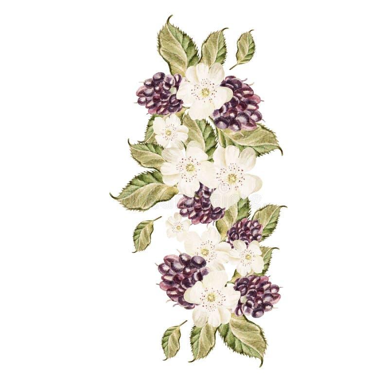 Ramo de flores y de zarzamoras watercolor stock de ilustración