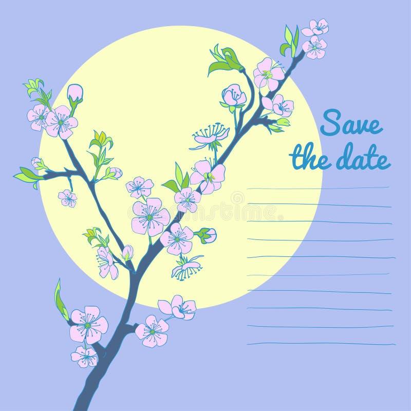 Ramo de florescência da cereja no fundo da lua ilustração royalty free