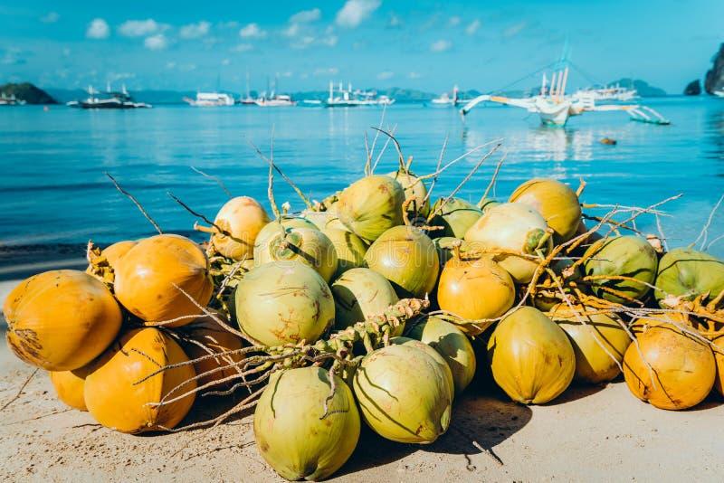 Ramo de frutos do coco na praia do corong do corong no EL Nido, Palawan, Filipinas foto de stock royalty free